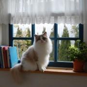 「お見合い写真ですから・・・」かわいいペットのお見合い写真大募集!!【第3回 Myペット フォトコンテスト】の投稿画像