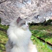 「専属モデルに・・・」かわいいペットのお見合い写真大募集!!【第3回 Myペット フォトコンテスト】の投稿画像