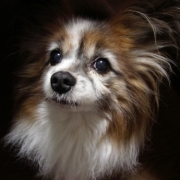「僕を見て・・・」かわいいペットのお見合い写真大募集!!【第3回 Myペット フォトコンテスト】の投稿画像