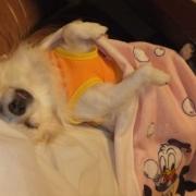 「爆睡中♪」【かわいいフォトブックKpi Pink】ついついニヤけてしまう写真大募集!☆の投稿画像