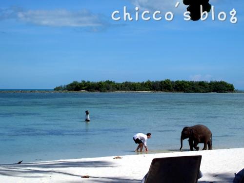 ビーチで赤ちゃん象と遊ぶ