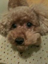 ペット用品通販のペピイ・愛犬の気になるニオイを抑えるおやつ100名大募集!!の画像(1枚目)