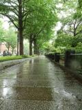 雨の日の横浜