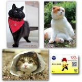 「わたしの癒し■猫ブログ■」の画像(1枚目)