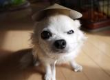 猫に小判、犬に菅笠の画像(5枚目)