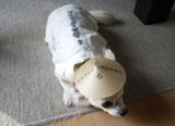 猫に小判、犬に菅笠の画像(6枚目)