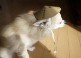 猫に小判、犬に菅笠の画像(4枚目)