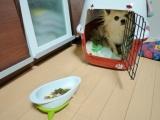 【モニター】ペット用品通販ペピイ 『ワンコプレート』の画像(5枚目)