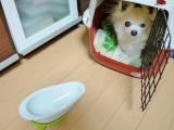 【モニター】ペット用品通販ペピイ 『ワンコプレート』の画像(8枚目)