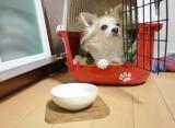 【モニター】ペット用品通販ペピイ 『ワンコプレート』の画像(3枚目)