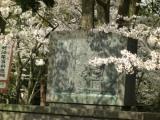 「宗麟公桜の下では火縄銃は似合いませんぞ」