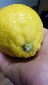 モニプラ:ピエトロのレモン♪の画像(2枚目)