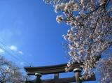 井村屋「美し豆腐」の画像(1枚目)