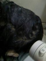 アンティアンの手作り固形石鹸シャンプー&ビネガーリンス使用しました♪の画像(14枚目)