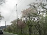 岐阜ドライブ旅(白川郷)の画像(2枚目)