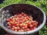 収穫を味わう幸せの画像(3枚目)