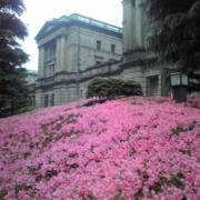 「日銀のツツジ」【5月限定】花や緑の画像大募集~ドイツ底面かん水プランターレチューザプレゼント~の投稿画像
