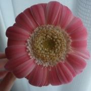 「お花屋さんで・・・」【5月限定】花や緑の画像大募集~ドイツ底面かん水プランターレチューザプレゼント~の投稿画像