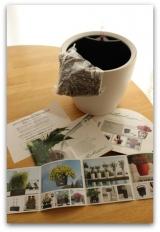 「不思議な紫陽花 & 根腐れしない!ドイツ製プランター『レチューザ』」の画像(4枚目)