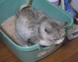 【ひのきの猫砂】でひのきの香り♪