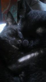 猫ちゃんのおしっこ臭に特化した消臭剤の画像(1枚目)