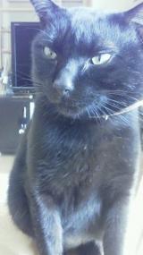 猫ちゃんのおしっこ臭に特化した消臭剤2の画像(2枚目)