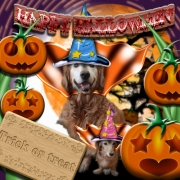 「HAPPY HALLOWEEN」【ハロウィン】ワンちゃんネコちゃん★フォトコンテスト【プレゼントあります】の投稿画像