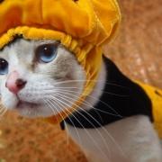 「はっぴーはろうぃん!」【ハロウィン】ワンちゃんネコちゃん★フォトコンテスト【プレゼントあります】の投稿画像