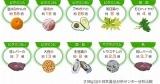 ユーグレナ入りロハス青汁「green×green」      青汁クッキーレシピご紹介♪の画像(3枚目)