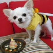 「HAPPY HALLOWEEN BEE!」【ハロウィン】ワンちゃんネコちゃん★フォトコンテスト【プレゼントあります】の投稿画像
