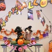 「Happy Halloween!」【ハロウィン】ワンちゃんネコちゃん★フォトコンテスト【プレゼントあります】の投稿画像