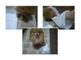 「【ハロウィン】ワンちゃんネコちゃん★フォトコンテスト 参加しました~☆」の画像(3枚目)