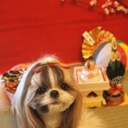 「お正月くらいはおしとやかに。。」【クリスマス&お正月】ワンちゃんネコちゃん★フォトコンテスト【プレゼントあり!】の投稿画像