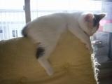 座椅子の上でお昼寝♪