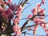 春の京都(1)の画像(4枚目)