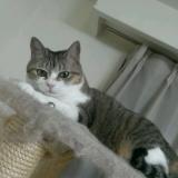 【猫ちゃん用おやつ】フリーズドライの馬刺し肉お試しの画像(5枚目)