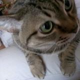 【猫ちゃん用おやつ】フリーズドライの馬刺し肉お試しの画像(6枚目)