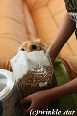 「プロフェッショナル・バランス 成犬用 1kg」