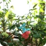 Butterfly(バタフライ) ピンバッジ♪