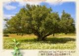 「植物の生命力が詰まったエイジングケアシリーズ「フィトブリーゼ」」の画像(2枚目)