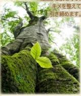 「植物の生命力が詰まったエイジングケアシリーズ「フィトブリーゼ」」の画像(3枚目)