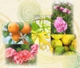 「植物の生命力が詰まったエイジングケアシリーズ「フィトブリーゼ」」の画像(4枚目)