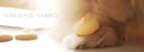☆飼い主も思わず食べそうになる 犬用手作りクッキー☆の画像(9枚目)