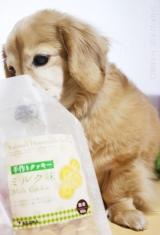 ☆飼い主も思わず食べそうになる 犬用手作りクッキー☆の画像(7枚目)