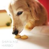 ☆飼い主も思わず食べそうになる 犬用手作りクッキー☆の画像(2枚目)