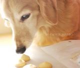 ☆飼い主も思わず食べそうになる 犬用手作りクッキー☆の画像(1枚目)