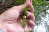 ニュージーランドのハチミツといえばの画像(1枚目)