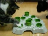 猫にも脳トレ ヽ(^。^)ノの画像(4枚目)