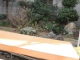 株式会社青山ガーデン様の桜ミニ盆栽の画像(3枚目)
