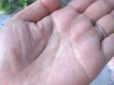 しっかり保湿するのにサラサラの使い心地♪「桜花媛モイスチャーシリーズ」のクチコミの画像(8枚目)